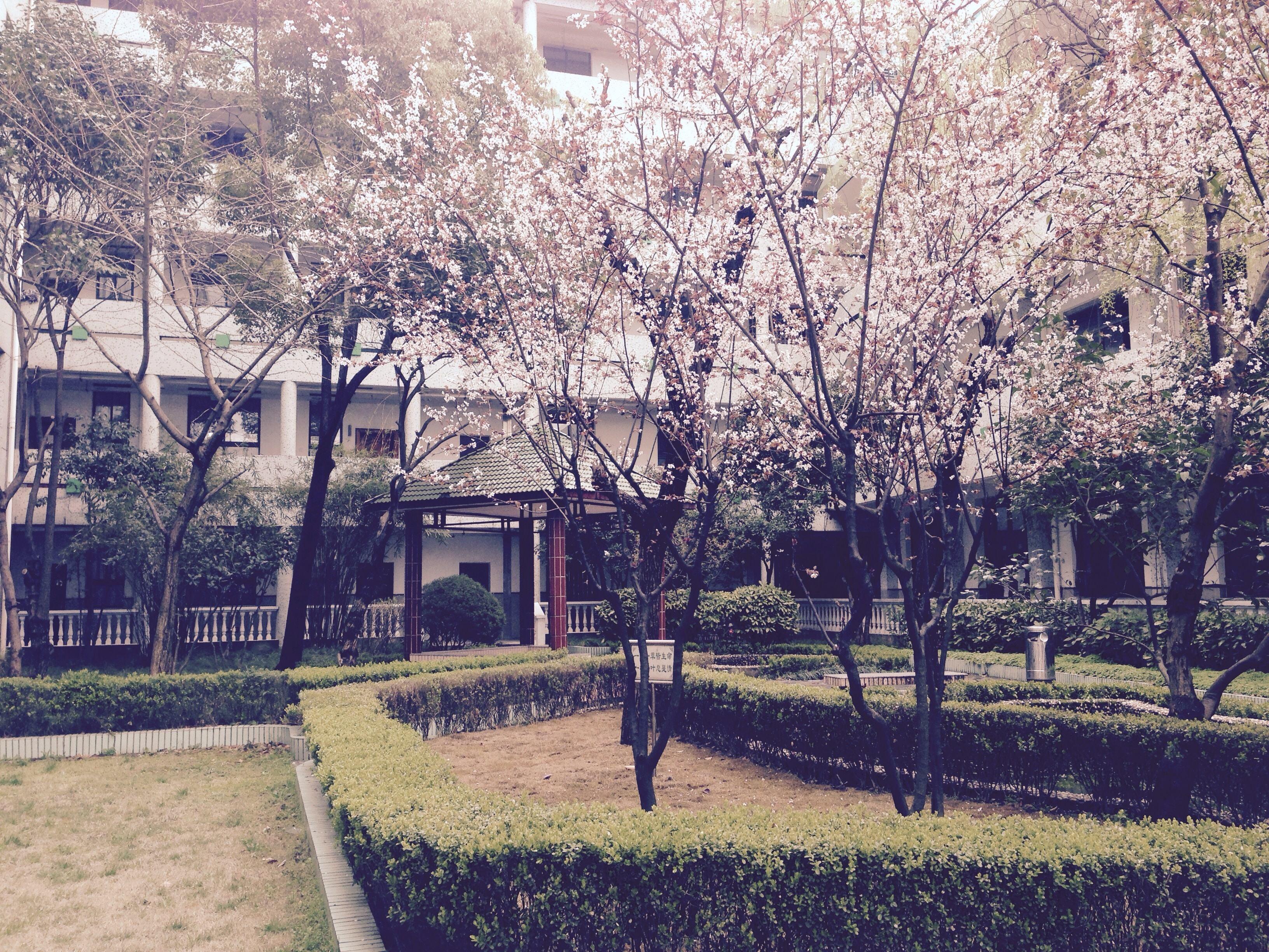 江湖夜雨十年灯-花溪小说